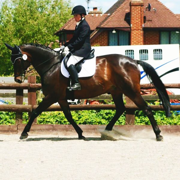 Liddy Equine Exceed