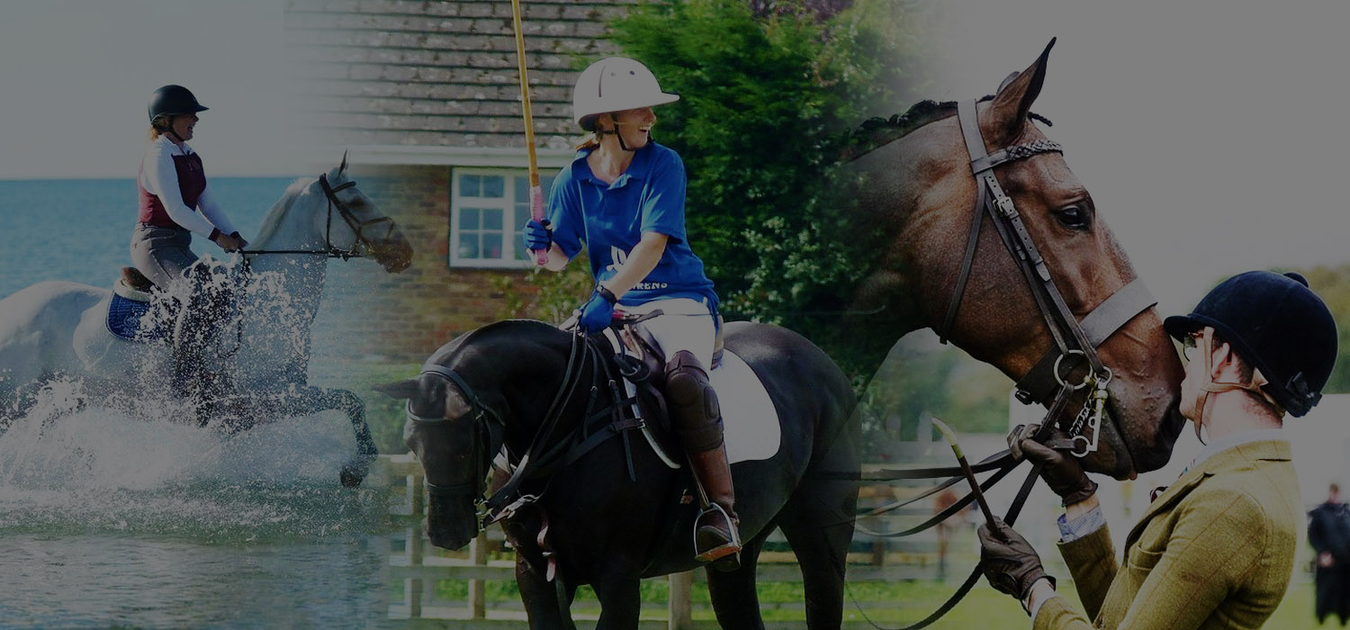 calmer bites equine exceed testimonial banner