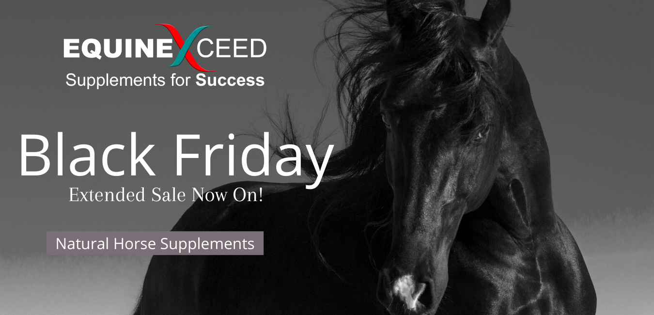 equine exceed black friday sale banner